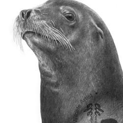 ANTHONY WYATT ELMO SEA LION PRINT