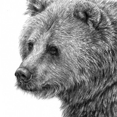 ANTHONY WYATT EUROPEAN BROWN BEAR PRINT