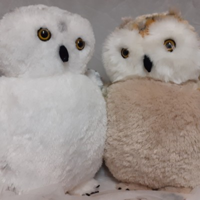 SPECKLED AND WHITE FLUFFY OWL