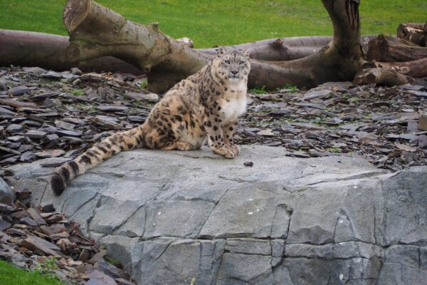 Silk Road Project - Home of the Snow Leopards